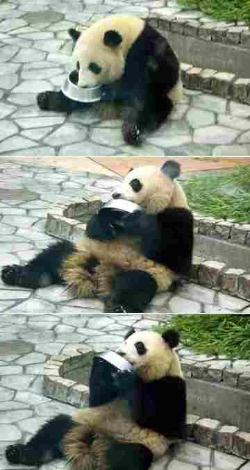 Panda_milk