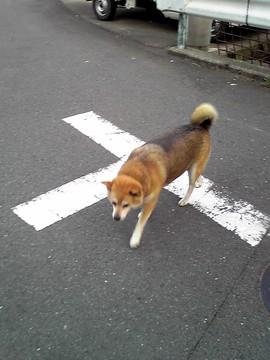 080812dog