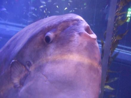 Kaiyuu_fish3